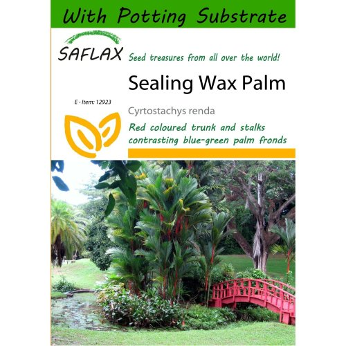 Saflax  - Sealing Wax Palm - Cyrtostachys Renda - 10 Seeds - with Potting Substrate for Better Cultivation