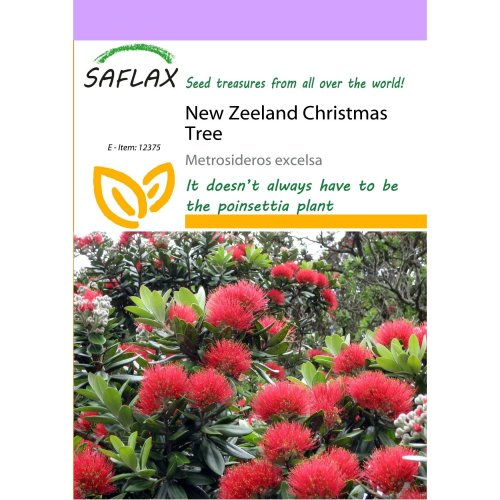 Saflax  - New Zeeland Christmas Tree - Metrosideros Excelsa - 300 Seeds