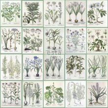 non-woven wallpaper XXL Pages from botanical flowers and plants book Light warm gray and green