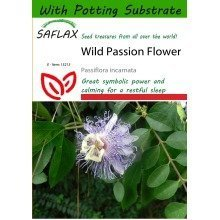 Saflax  - Wild Passion Flower - Passiflora Incarnata - 5 Seeds - with Potting Substrate for Better Cultivation