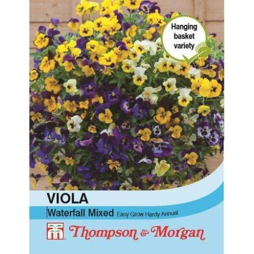 Thompson & Morgan - Flower - Viola Waterfall Mixed - 50 Seed