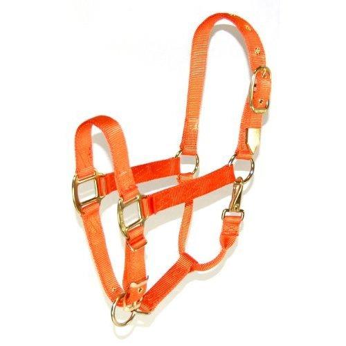 Hamilton 1-Inch Nylon Halter with Adjustable Chin, Mango Orange - Average Size
