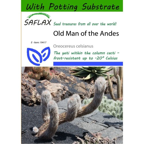 Saflax  - Old Man of the Andes - Oreocereus Celsianus - 40 Seeds - with Potting Substrate for Better Cultivation