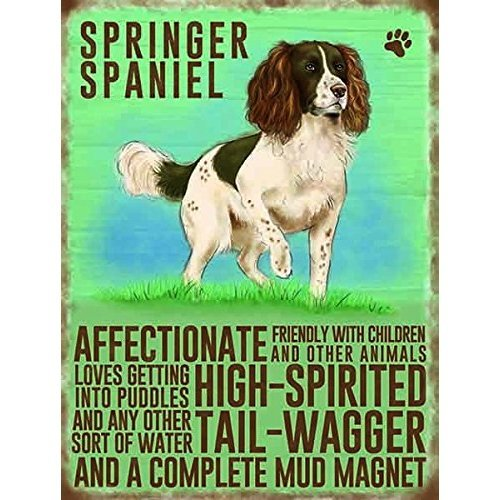 Springer Spaniel fridge magnet