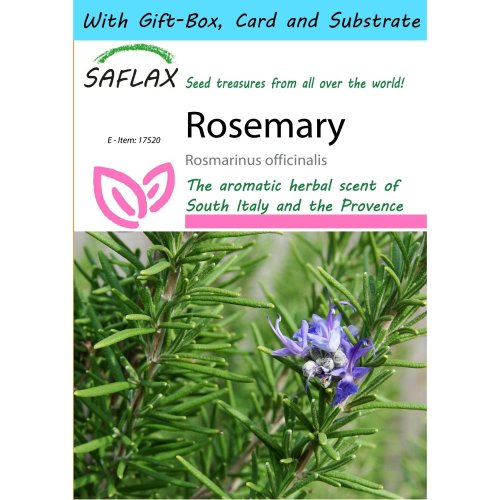 Saflax Gift Set - Rosemary - Rosmarinus Officinalis - 100 Seeds - with Gift Box, Card, Label and Potting Substrate