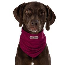 Insect Shield® Dog Loop - Invisible, Odourless Insect Protection (xs - Neck 24 -  dog insect shield loop sizes