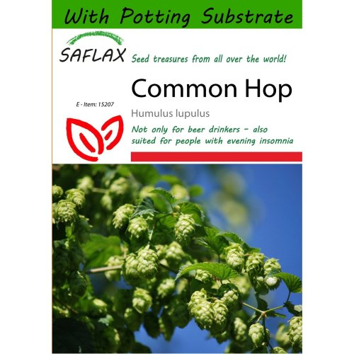 Saflax  - Common Hop - Humulus Lupulus - 50 Seeds - with Potting Substrate for Better Cultivation
