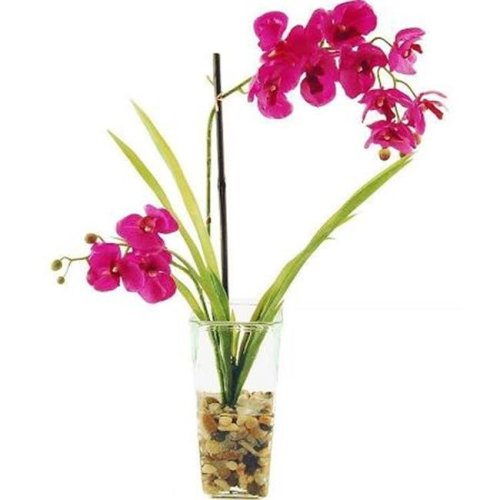 Designs by Lauren 16W29 22 in. Phalaenopsis Orchids Tied to a Bamboo Stake in a Glass Vase with River Rocks & Acrylic Water