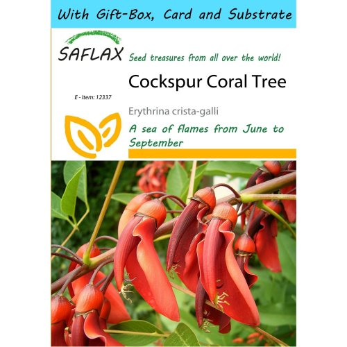 Saflax Gift Set - Cockspur Coral Tree - Erythrina Crista-galli - 6 Seeds - with Gift Box, Card, Label and Potting Substrate