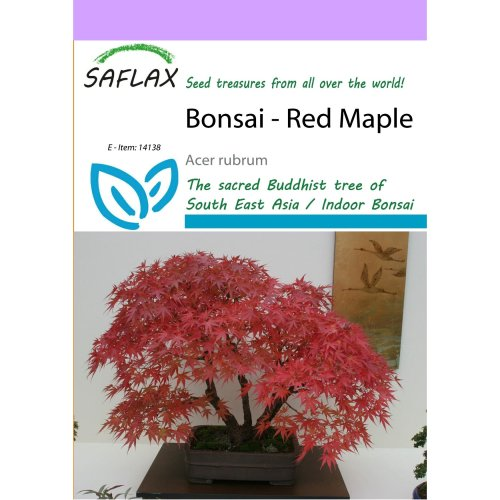 Saflax  - Bonsai - Red Maple - Acer Rubrum - 20 Seeds