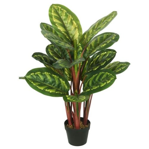 Peacock Plant Everyday Tree with Pot-Green & Brown - 3 ft.