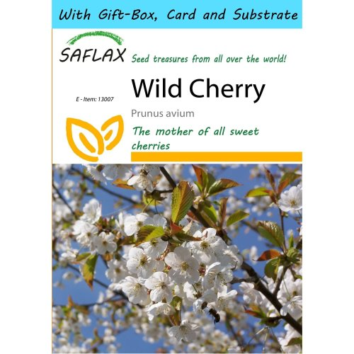 Saflax Gift Set - Wild Cherry - Prunus Avium - 10 Seeds - with Gift Box, Card, Label and Potting Substrate