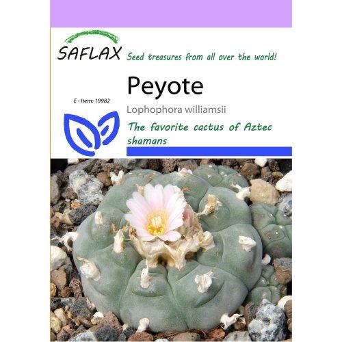 20 Saflax Peyote Seeds | Lophophora Williamsii Seeds