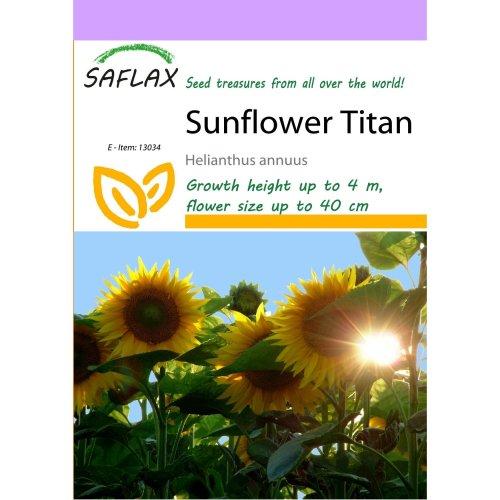 Saflax  - Sunflower Titan - Helianthus Annuus  - 20 Seeds