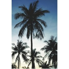 wall mural palm trees blue - 158849