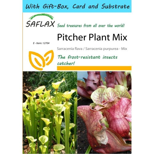 Saflax Gift Set - Pitcher Plant Mix - Sarracenia Flava / S. Purpurea - Mix - 10 Seeds - with Gift Box, Card, Label and Potting Substrate