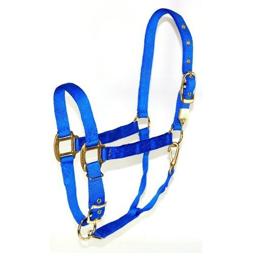 Hamilton 1-Inch Nylon Halter with Adjustable Chin, Blue - Small Size