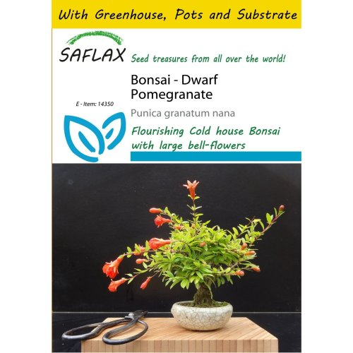 Saflax Potting Set - Bonsai - Dwarf Pomegranate - Punica Granatum Nana - 50 Seeds - with Mini Greenhouse, Potting Substrate and 2 Pots